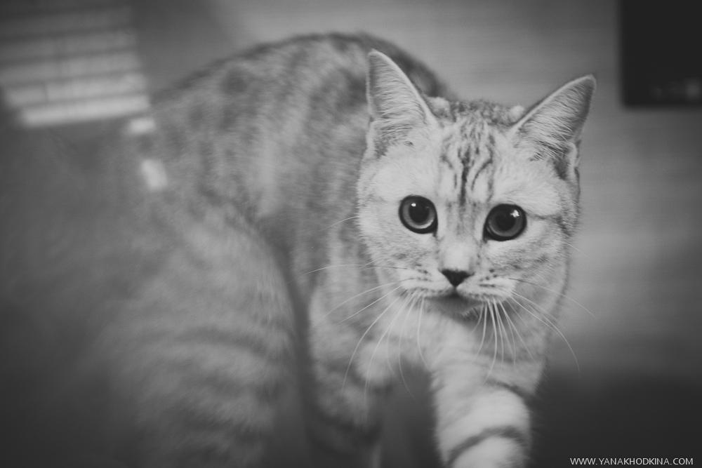 Как фотографировать животных